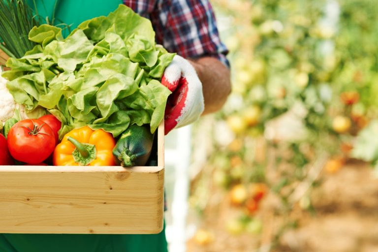 Запорізька ТПП реалізує проєкт для розвитку органічного агровиробництва у Запорізькому регіоні